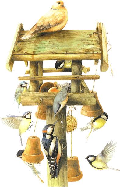 gif oiseau