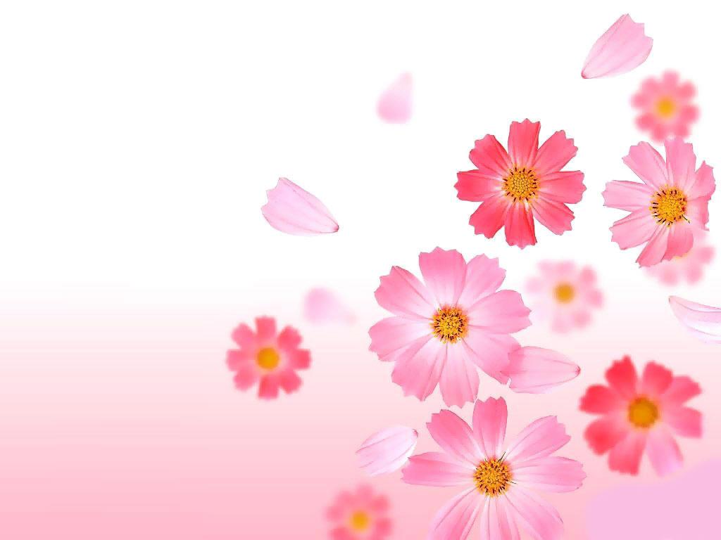 fond d'écran fleur
